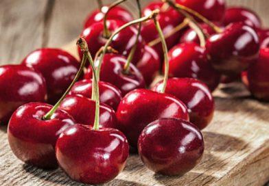 Maltempo: dimezzata la raccolta delle ciliegie in Emilia